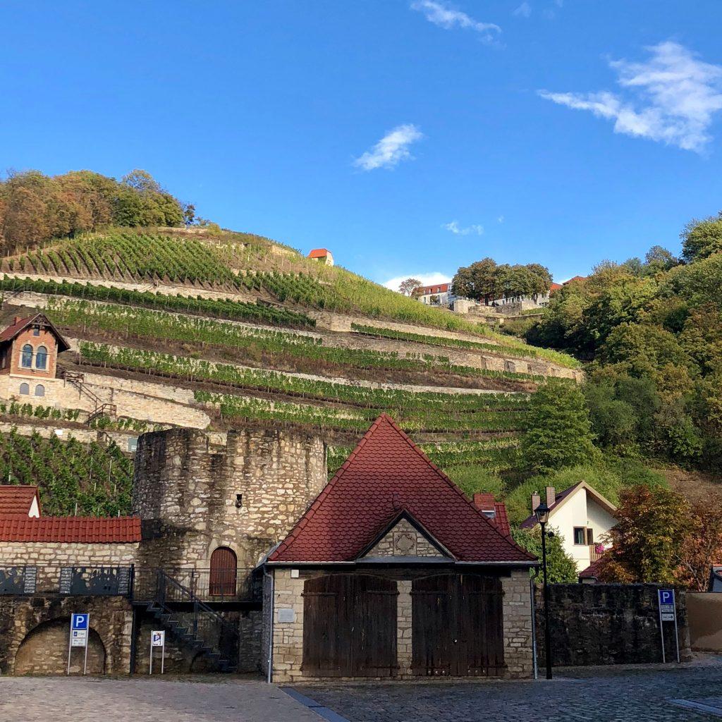 BTG Mitgliederversammlung 2018 - Blick zum Schlifter-Weinberg über die alte Stadtmauer